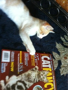 Now you can order an annual subscription to CAT FANCY MAGAZINE for just $18.99 through Kizzme Kitty.