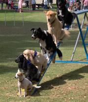 2012  Pet Appreciation Fair  & WALK