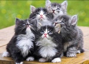 cat-friskies-blimp