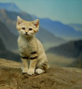 cat-greatwall