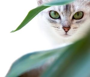 cat-hermes-scarf