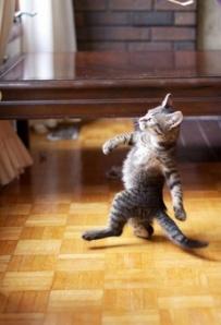 cat-jagger-dance