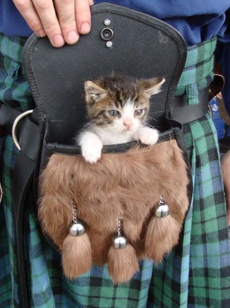 Free kitty organizer w...