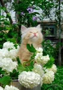 cat-maryjane