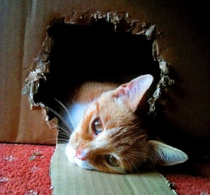 cat-outside-the-box