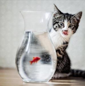 cat-redfish-bowl