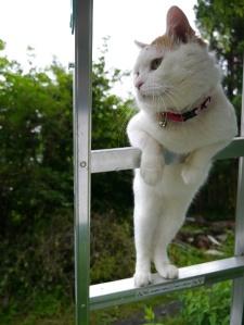 cat-step-class