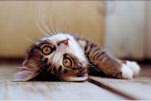 cat-sting-theory