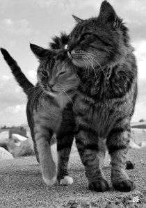 funny-cat-photo-two-cats-2