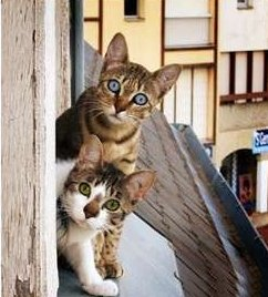 funny-cat-photo-two-cats-window