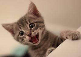 kitten-surprise-1