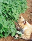 catnip-cat-photo