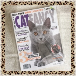 Collectible Edition Cat Fancy Magazine June 2014 ~ (Chartreux & Havana Brown)