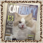 Collectible Edition Cat Fancy Magazine August 2014 ~ Introduce Your Cat & Newborn (Bobcat & Nebelung)